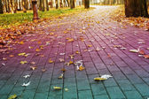 L'automne — Photo