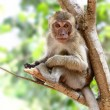 Stock Photo: Young monkey