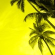 Silhouette of coconut palms - Stock Photo