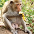 Monkey with banana — Stock Photo #4550293