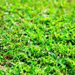 Green grass - Stok fotoraf