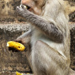 Monkey with banana - Stock Photo
