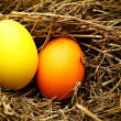 Nest with easter eggs - Stockfoto