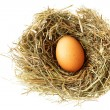 Stock Photo: Nest with egg