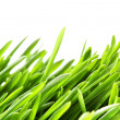 Green grass — Stock Photo #4551600