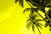Silhouette of coconut palms — Stock Photo