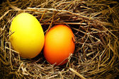 Nest with easter eggs — Foto Stock