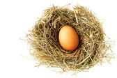 Nest with egg — Stock Photo