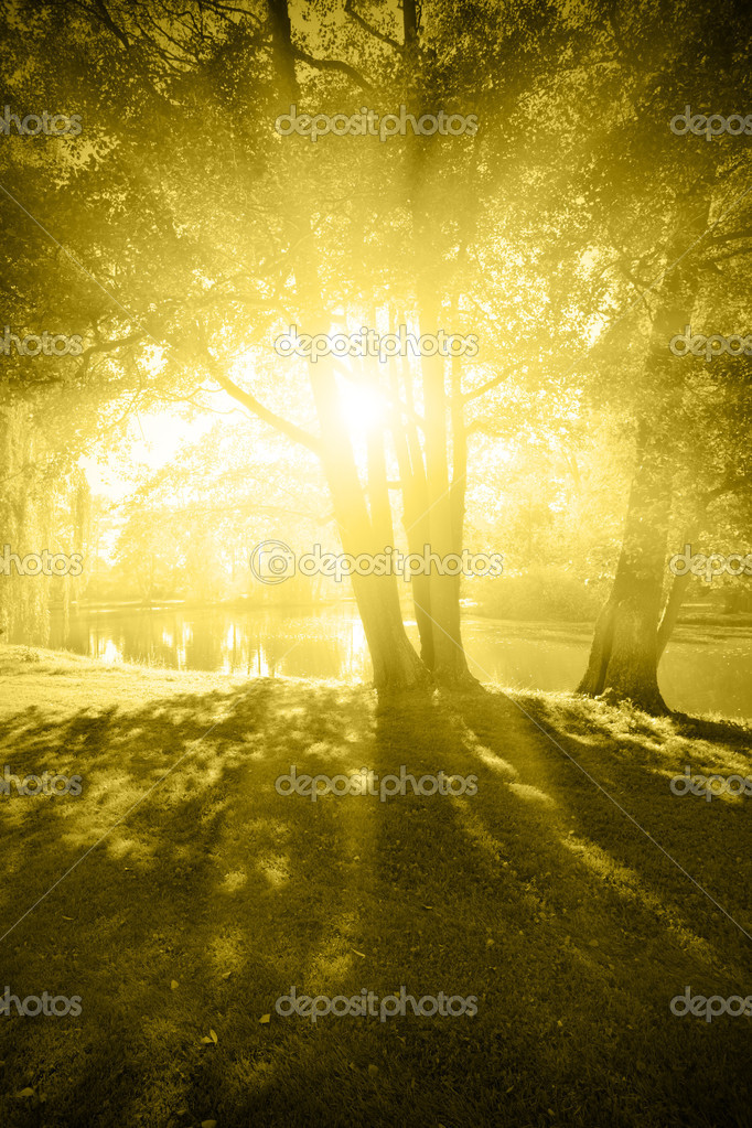 Sun shine out through branch of trees — Stock Photo #4553371