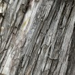 Bark of very old three — Stok fotoğraf