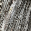 Bark of very old three — Stockfoto