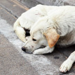 Homeless stray dog - Foto Stock