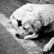 Homeless stray dog - Stok fotoğraf