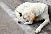 Homeless stray dog — Stock Photo