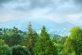 Wooded mountains — Stock Photo