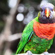 Colorful parrot - Foto Stock