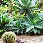 Cactuses — Stock Photo