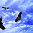 Three eagles on the fly — Stockfoto