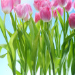 Tulips flowers — Stock Photo #4990001