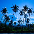 Palm silhouettes on blue sky — Stock Photo