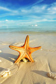 Starfish on a beach — Stock Photo