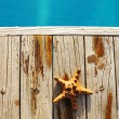 Starfish by a swimming pool - Stock Photo