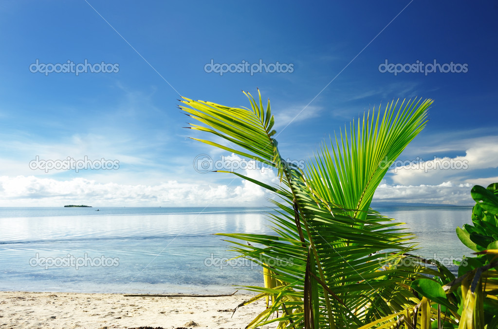 Beautiful wild beach at remote island, Philippines  Stock Photo #4816015
