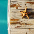 Starfish by a swimming pool — Stock Photo
