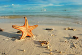 Starfish on a beach — Stock Photo