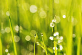 Morning grass — Стоковое фото