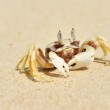 Crab on a beach — Stock Photo #5015223