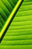 Palm tree leaf background — Stock Photo