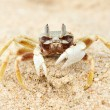 Crab on a beach — Stock fotografie