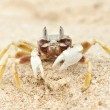 Crab on a beach — Stock Photo #5257824