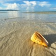 Shell on a beach — Stock Photo