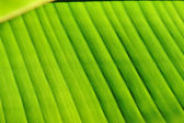 Palm tree leaf background — Stock Photo