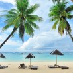 Beautiful beach with palm trees — Stock Photo