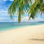 Beautiful beach with palm trees — Stock Photo #5306360