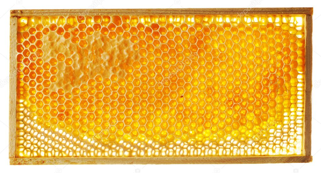Honeycomb isolated on white background — Stock Photo #5335245