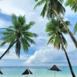Stock Photo: Beautiful beach with palm trees