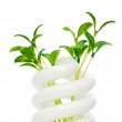 Energy saving lamp with green seedling on white — Stock Photo