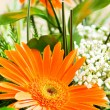 Orange gerbera flower agaisnt green blurred background - Stock Photo