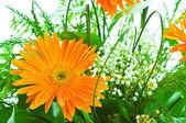 Gerbera laranja flor agaisnt verde turva fundo — Foto Stock