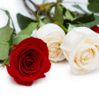Red and white roses isolated on white — Stock Photo #4214019