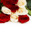 Red and white roses isolated on white — Stock Photo #4216396