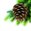 Cone and christmas tree isolated — Stock Photo #4219378