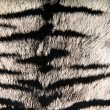 Imitation of tiger leather as a background — Stock Photo