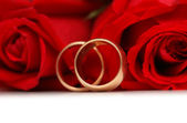 Red roses and rings isolated on the white background — Stock fotografie