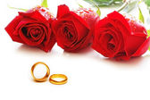 Three roses and rings isolated on the white — Foto Stock
