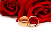 Golden rings and red roses isolated on white — Stock Photo